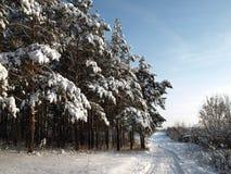 Straße nahe Wald Lizenzfreie Stockfotografie