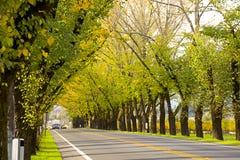 Straße in Napa Lizenzfreie Stockfotografie