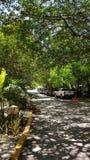 Straße in Playa Del Cermen, Mexiko lizenzfreie stockbilder