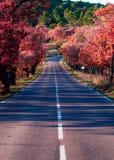 Straße in Provence, Frankreich Stockfotografie