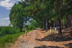 Straße am Rand des Waldes Stockbild