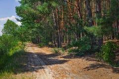 Straße am Rand des Waldes Stockfotografie