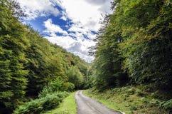 Straße tru der Wald Stockbild