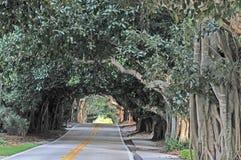 Straße umgeben durch Banyanbäume lizenzfreie stockbilder
