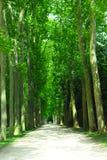 Straße und Bäume Lizenzfreies Stockbild