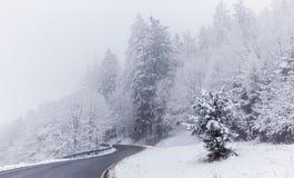 Straße und Bäume bedeckt mit Schnee Lizenzfreies Stockfoto