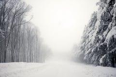 Straße und Bäume im Blizzard Lizenzfreies Stockfoto