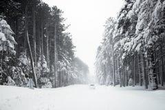 Straße und Bäume im Blizzard Lizenzfreies Stockbild