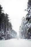 Straße und Bäume im Blizzard Lizenzfreie Stockfotos
