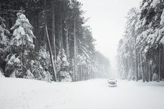 Straße und Bäume im Blizzard Stockbild