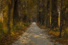 Straße und Bäume im Herbst Stockbild
