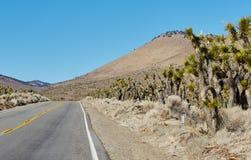 Straße und Berg im Nationalpark, USA Stockfotografie