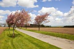 Straße und Frühjahrblüte Stockbilder