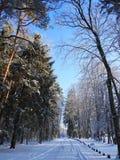 Straße und schöne schneebedeckte Bäume im Winter, Litauen Stockfoto