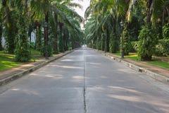 Straße und schöner grüner Garten stockbild