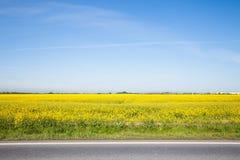 Straße und schönes gelbes Feld Stockbilder