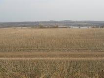Straße und Teich auf dem Gebiet im Frühjahr Lizenzfreie Stockfotografie