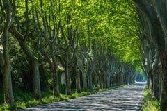 Straße unter alten Bäumen stockfotos