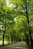 Straße unter Bäumen Stockfotografie