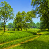 Straße unter grünen Bäumen Stockfoto
