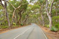 Straße unter Gummibäumen Südaustralien Stockfoto