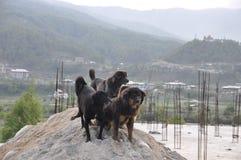 Straße verfolgt Bhutan Stockfotos