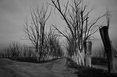 Straße in verlassenem Park Lizenzfreie Stockbilder
