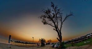 Straße von Bäumen Lizenzfreies Stockfoto