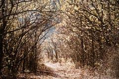 Straße von Blättern Lizenzfreie Stockfotos
