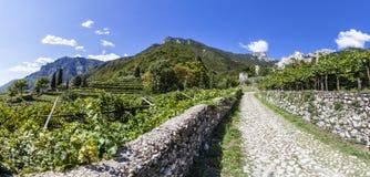 Straße von der Stadt Sabbinoara zum Schloss von Avio durch Weinberg herein Stockbilder