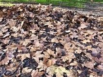 Straße von trockenen Blättern stockfoto