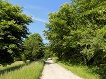 Straße, Wiese und Wald Stockbilder
