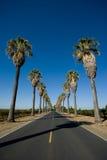 Straße zeichnete in den Palmen lizenzfreies stockfoto