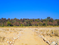 Straße zu einem dichten Dschungel Stockbilder