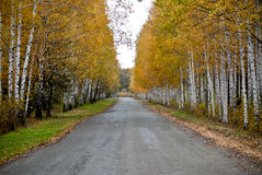 Straße zu einem Holz Lizenzfreies Stockfoto