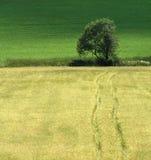 Straße zum Baum Stockfotografie