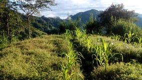 Straße zum Dschungel Stockfotografie