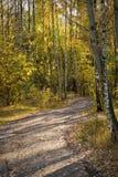 Straße zum Herbstpark Stockbild