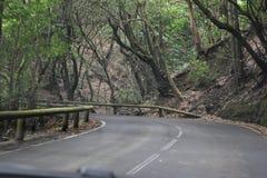 Straße zum schönen Lorbeerwald mit vielen großen grünen moosigen Bäumen im Norden von Teneriffa in den Anaga-Bergen lizenzfreie stockbilder