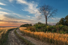 Straße zum Sonnenuntergang lizenzfreie stockfotos