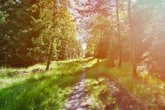 Straße zum Wald stockbild