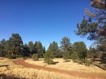 Straße zum Wald an einem sonnigen Tag Südwestlich der USA stockbild