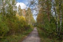 Straße zur Birkenwaldung lizenzfreie stockbilder