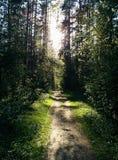 Straße zur Sonne Lizenzfreie Stockfotos