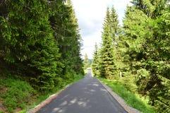 Straße zwischen Bäumen stockbilder