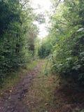 Straße zwischen Büschen stockfotografie