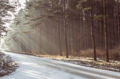 Straße zwischen dem Wald Lizenzfreie Stockfotos