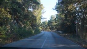 Straße zwischen dem Wald in der natürlichen Reserve stock video footage
