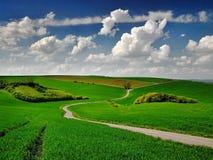 Straße zwischen den Feldern stockfotografie