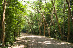 Straße zwischen großem Baum Lizenzfreies Stockfoto
